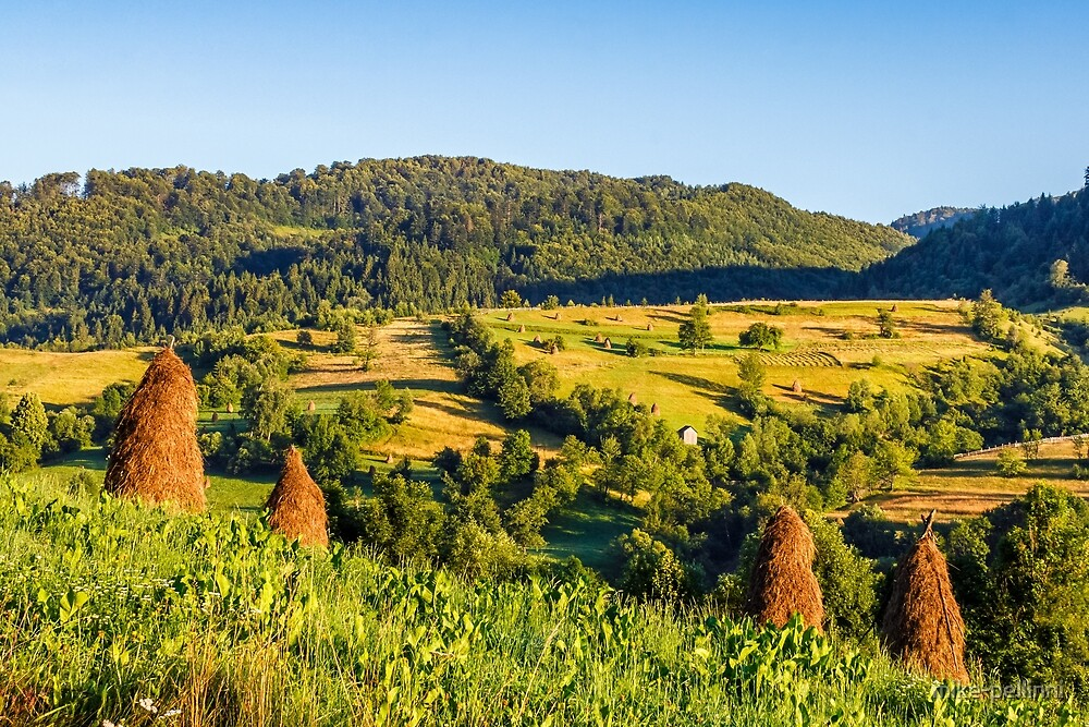 agricultural fields on hills sunrise by mike-pellinni