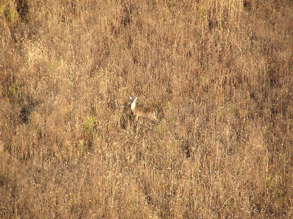 Hiding in Plain site by kateilles