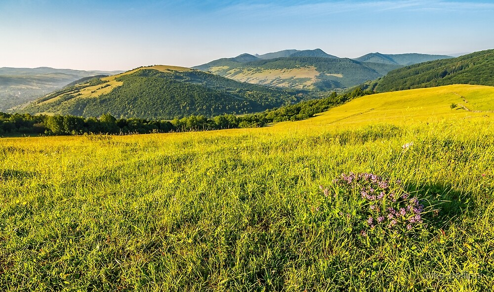 wild flowers on rural hillside by mike-pellinni