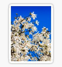 magnolia flowers on a blue sky background Sticker