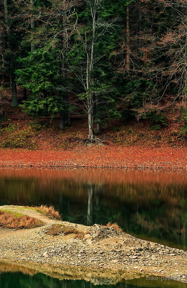spruce forest on the lake in mountains by mike-pellinni