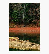 spruce forest on the lake in mountains Photographic Print