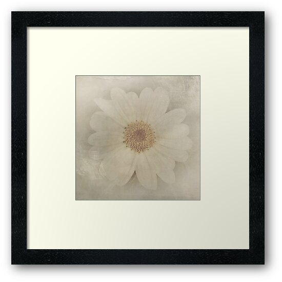 Vintage Painterly White Daisy  by Beverly Claire Kaiya