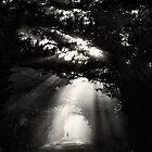 Dark tree's by marshall calvert  IPA