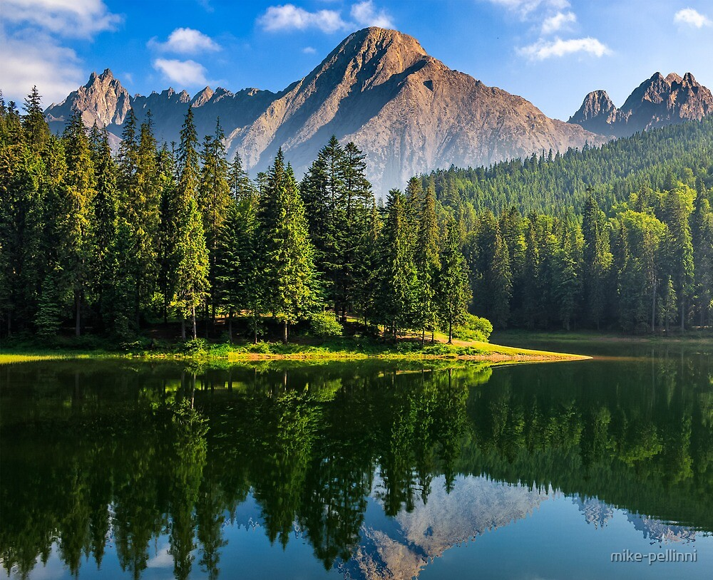spruce trees near the lake in mountains by mike-pellinni