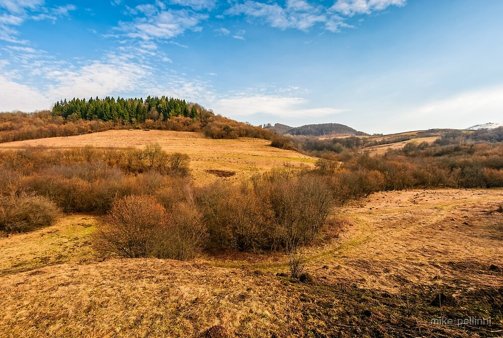 forest on a mountain hill side by mike-pellinni