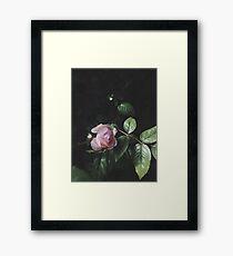 Pastel Pink Rose Framed Print