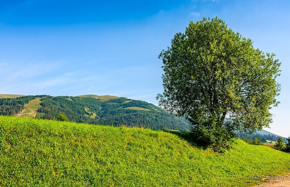tree in rural area on beautiful summer day by mike-pellinni
