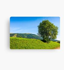 tree in rural area on beautiful summer day Canvas Print