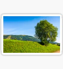 tree in rural area on beautiful summer day Sticker
