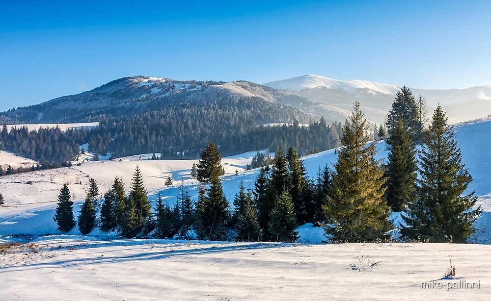 spruce forest on snowy meadow in high mountains by mike-pellinni