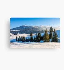 spruce forest on snowy meadow in high mountains Canvas Print