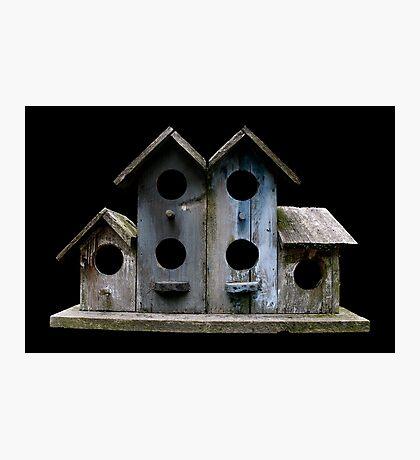 Sluggish Bird's Housing Market Photographic Print