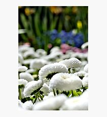 blooming clouds - vertikal Photographic Print
