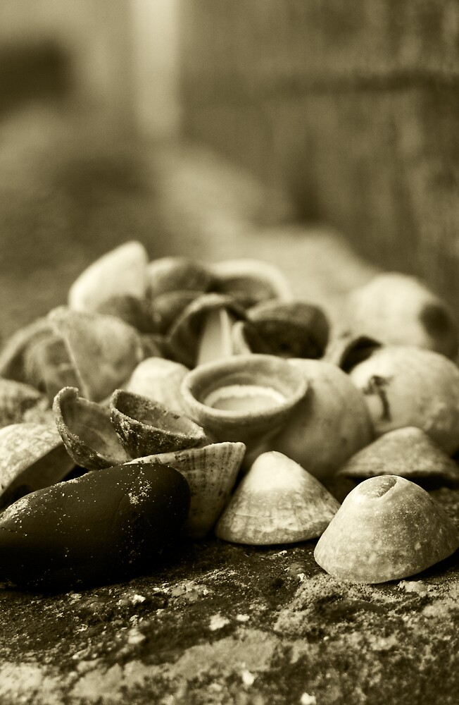 Shells by Alan May