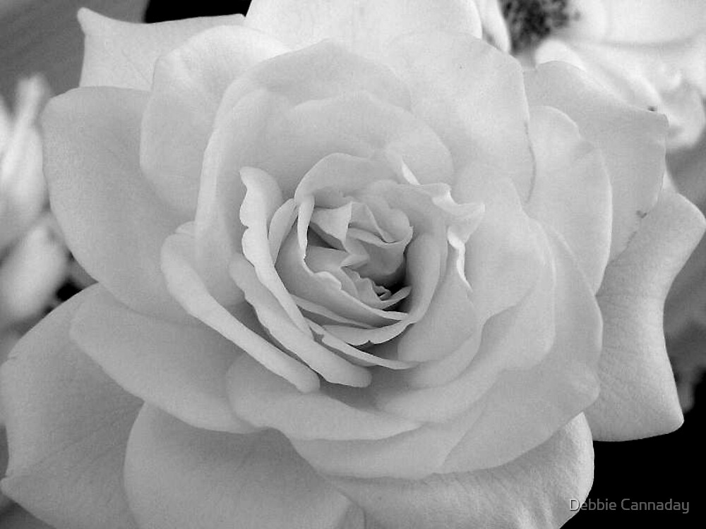 Rose by Debbie Cannaday
