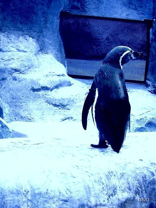penguin by murr