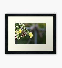 Lámina enmarcada Yellow Lehua