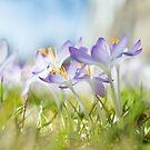Tanzende Blumen  von Iridescentcloud