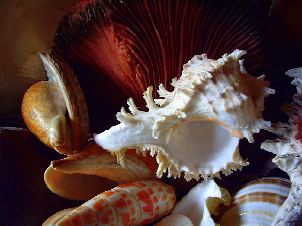 Shells by lurline