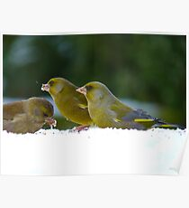 Aghhh!!..Iced Seed... I Guess It's Better Than None!! - Green finches snow Poster