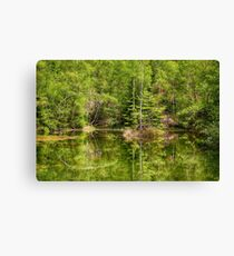 the mirrored forest Canvas Print