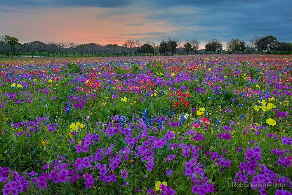 Colorful Wildflowers of Texas 1 by RobGreebonPhoto