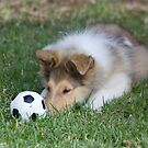 Focused Collie Puppy by Jan  Wall