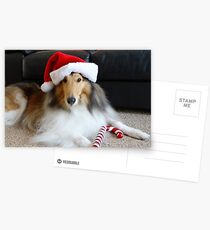 Christmas Collie Postcards