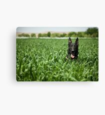 A military working dog sits in a field near a security position. Canvas Print