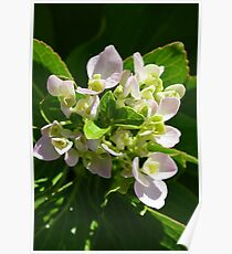 Delicate pink flowers Poster