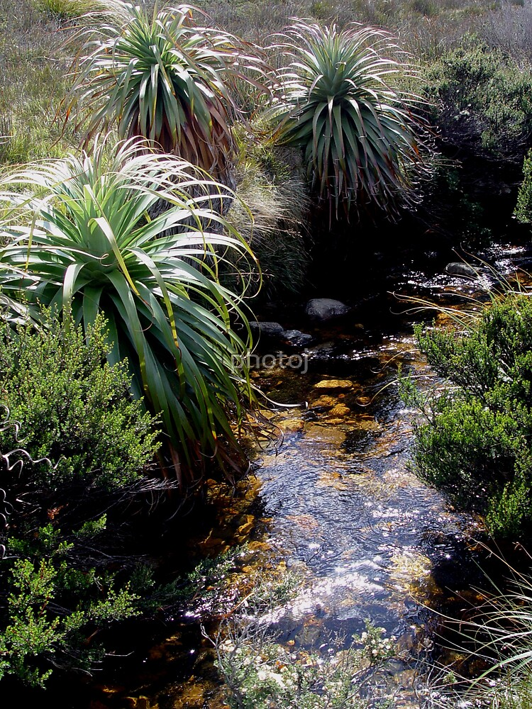 photoj Tas Cradle National Park by photoj