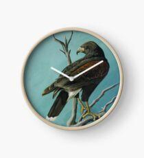 Harris Hawk Clock
