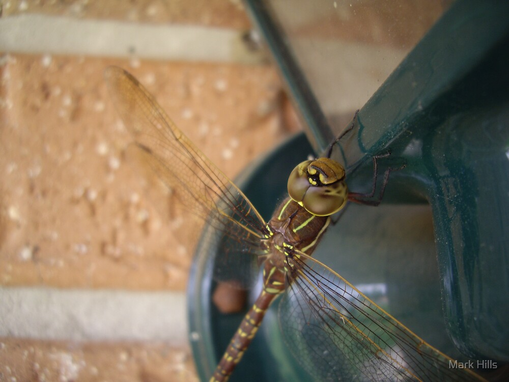 Dragonfly2 by Mark Hills