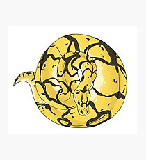 Ball Python (Bumblebee) Photographic Print