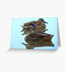 We're Cool, Calm And Collected..! Mallard Ducks - NZ Greeting Card