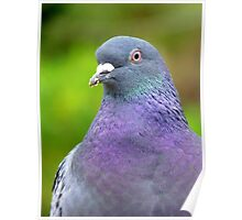 I Am Supposed To Keep Abreast Of Things! Pigeon - NZ Poster