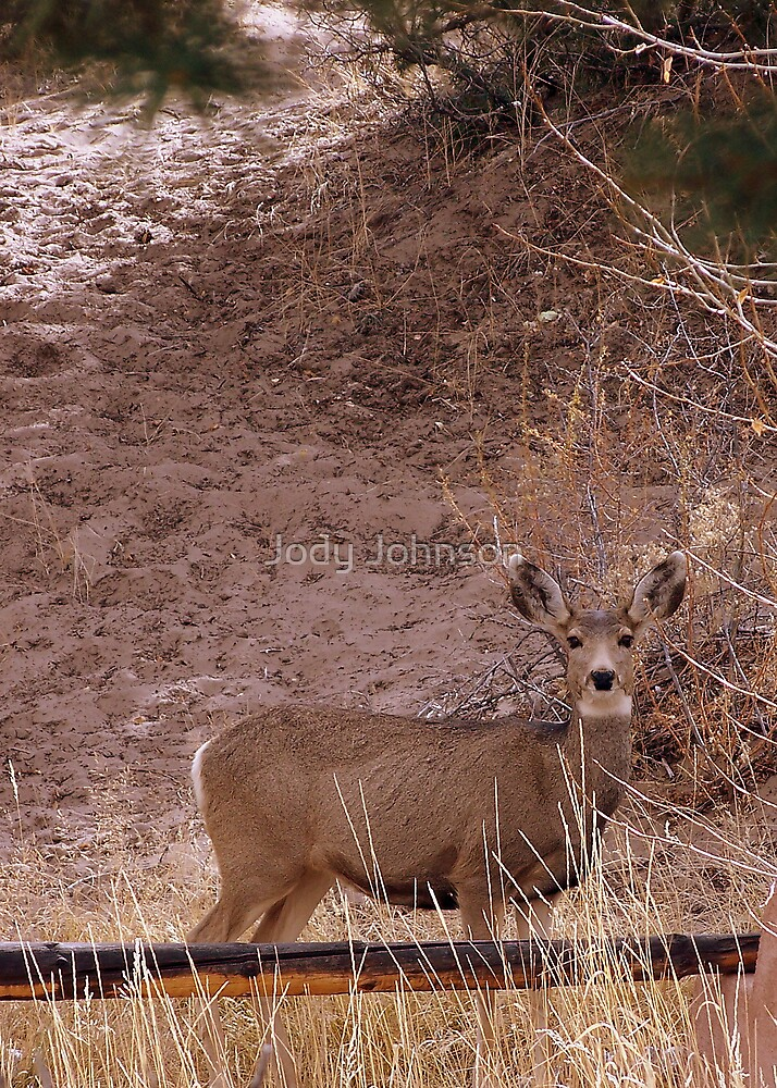 Mule deer in pose by Jody Johnson