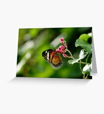 Orange yellow butterfly sitting on little pink flower. Greeting Card