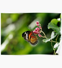 Orange yellow butterfly sitting on little pink flower. Poster