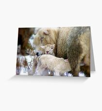 Sorry Love!! You Arrived A Little Earlier Than Expected!!...Lambs - NZ Greeting Card