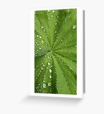 Rain water droplets on green plant leaf Greeting Card