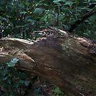 Bird Dog wood creature by patjila