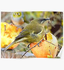 There Appears To Be A Bit Of A Tail Wind Today!!... - Bellbird - NZ Poster
