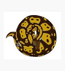 Ball Python (Pastel) Photographic Print