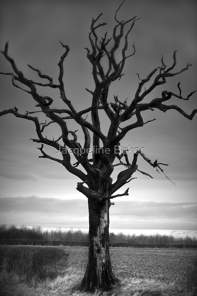 The Old Fen Tree by Jacqueline Baker