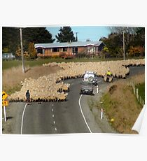 Is This A 65km Zone?..Moving Sheep - NZ Poster