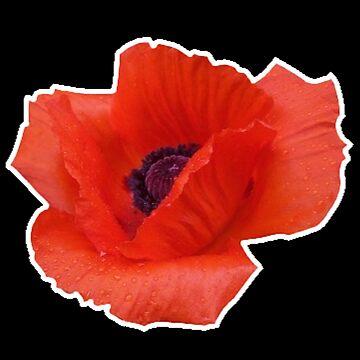 Red Poppy by hisuidaze