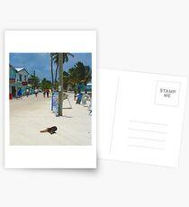 Caye Caulker, Belize Postcards
