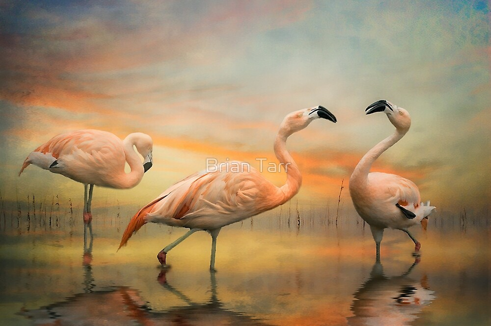 Flamingo Dusk by Brian Tarr
